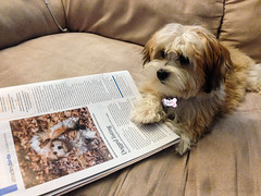 Pip sees herself in BirdWatching Magazine!! (Laura Erickson) Tags: family people pip