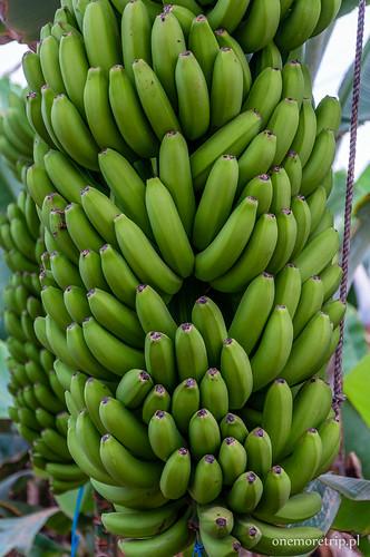 170206-6406-banany