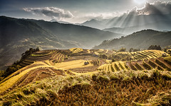 Mountains of light (Asian Hideaways Photography) Tags: rice ricefield travel travelphotography sunset vietnam paddy asia southeastasia hagiang harvest landscape rizière exterior clouds naturallight nature sunrays terrace