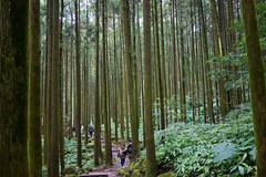 步道 (momodie81) Tags: 馬武督 探索 森林 步道 陰天 台灣 新竹 關西