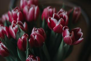 Bringing spring inside!