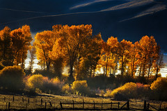 Colorado Autumn Morning (Vision & Light Photo) Tags: autumn fall season golden yellow white aspen tree woods forest wilderness nature lines vibrant nationalpark september october aspentree photo photograph photography fineart fineartphoto fineartphotograph fineartphotography colorado sanjuanmountains farm morning backlit frost field hills