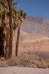 Palms and Mountains, Anza-Borrego (Jeffrey Sullivan) Tags: anzaborrego state park borrego springs southern california desert usa landscape nature photography canon 5dmarkii photo copyright march 2012 palm tree