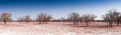 Fairytale In A Desert. (Alec Lux) Tags: etosha desert dry landscape leaves namibia nature parc red salt salty scenic trees white