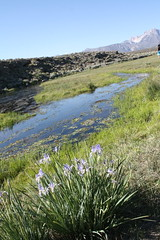 Owens River (Sarah B in SD) Tags: california usa nature us roadtrip mammoth sierras roadtrippin easternsierras owensriver sooc biggtrippin