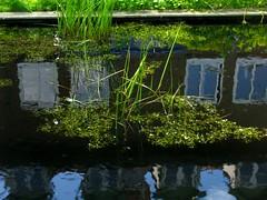 IMG_8929 Reflection Egmond St.Lioba-Kloster (Traud) Tags: spiegelbild reflection stlioba kloster monastery egmond niederlande holland nordholland biotop feuchtbiotop pool teich benediktinerinnen egmondbinnen