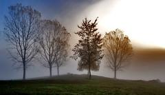 lago di canterno immerso nella nebbia (sydclash) Tags: italy lake roma nature alberi sunrise landscape lago alba ngc natura siluette lazio anagni fiuggi frosinone ferentino fumone canterno lagodicanterno sydclash robertomanzato