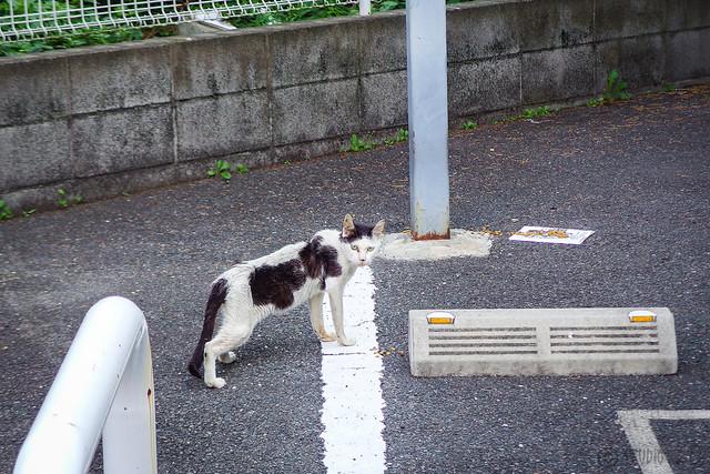 Today's Cat@2014-07-16