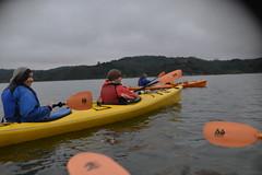D60_4129 (Axelhouston) Tags: blue bay san francisco kayaking bioluminescence watera a99xel tomalis book2014