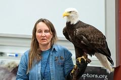 DSC_9181pse1600x1063 (camperjoemndot) Tags: project bob raptor eagles soar decorah hatchery luthercollege july2014 resoucre