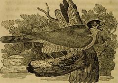 """Anglų lietuvių žodynas. Žodis falcon-gentil reiškia """"falcon-gentil lietuviškai."""