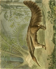 Anglų lietuvių žodynas. Žodis millepedes reiškia midapedes lietuviškai.