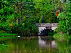 In Wrlitz Park (echumachenco) Tags: park trees water spring swan wasser april schwan bume 18thcentury frhling dessau coswig stonebridge steinbrcke sachsenanhalt wrlitz