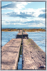 Arbroath (elikyle) Tags: sea seaweed water pier seaside gulls arbroath