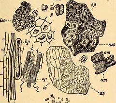 Anglų lietuvių žodynas. Žodis sarcocarp reiškia sarkokarpas lietuviškai.