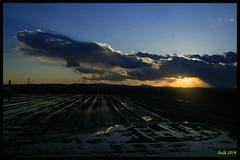 Atardecer arrocero (Almudena Raya) Tags: sunset sea espaa valencia atardecer spain rice campos arroz spagne