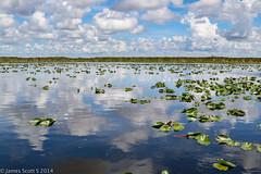 20140802 70D Everglades Holiday Park 66 (James Scott S) Tags: park holiday boys weather animal canon scott landscape james florida gator wildlife alligator s wellington everglades planet fl davie discovery ef wx 24105 70d lr5