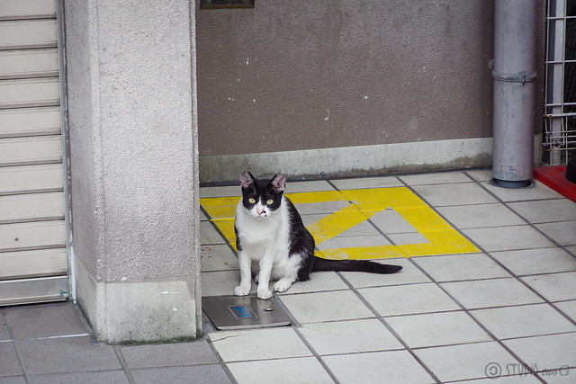 Today's Cat@2014-08-06