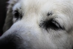 (juanjo.cuenca) Tags: summer dog white holiday cute animals photo eyes tranquility sleepy rest gaze quietude