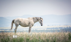 A Place (Toni Kahnke) Tags: horse animal southdakota solitude country pasture prairie bellefourche tonikahnke