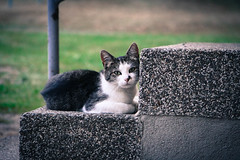 Cute Cat (teteroon) Tags: stairs treppe filter katze