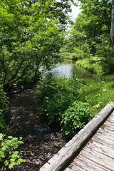 (ComplexNumber.i) Tags: bridge summer green nature river
