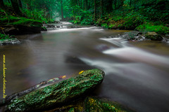 Stream (!!! Painting with Light !!! #schauer) Tags: world autumn winter summer mist cold green fall nature wet rain weather rock fog stone creek forest river germany season landscape bayern deutschland europe long exposure nebel outdoor earth herbst bach gras fels wald strom re