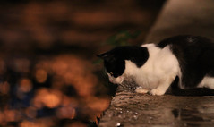 Que bonitos reflejos (vic_206) Tags: cute night cat noche bokeh gato dubrovnik canoneos7d catmoments canon70200f28lisii