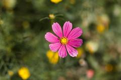 "De Hortus Botanicus - Flower • <a style=""font-size:0.8em;"" href=""http://www.flickr.com/photos/92529237@N02/15080913106/"" target=""_blank"">View on Flickr</a>"
