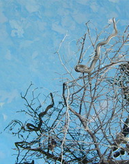Living on the Edge (Omi<3) Tags: reflection tree water snake branches there hanging