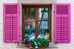 Pink Window - Das rosa Fenster (edelweisskoenig) Tags: elsass europa frankreich alsace europe france bergheim window fenster doll puppet puppe deko pink shutter fensterladen girly nikon dx d300 edelweisskoenig jürgen fabian eu color colour colors colours colourful farbe farben farbenfroh rememberthatmomentlevel1 rememberthatmomentlevel2 rememberthatmomentlevel3 rememberthatmomentlevel4 nikonflickraward rememberthatmomentlevel5 flickrbronzetrophygroup thebestpicturegallery colorful farbig rosa bunt blinds travel reisen travelphotography reise reisefotografie fernweh