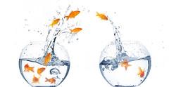 the getaway (comointegrationtest) Tags: wien aquarium austria wasser familie bewegung spiegelung schssel glas umzug blase element tier flchtling wanderung flucht fische freiheit springen goldfisch schwarm behlter spritzen lebewesen klarheit auswandern umziehen reinheit flssig auswanderung vlkerwanderung fischglas bersiedlung