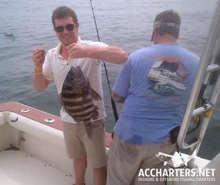 sheephead fishing Amelia Island, FL