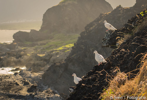 White doves overlooking Sansiantai Island