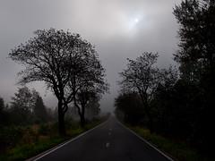 Strae durchs Venn (ustrassmann) Tags: nebel belgie belgien hohesvenn hautesfagnes strase mtzenich brackvenn nebelimmoor