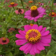 ดอกไม้สีงามตามกาลก็เหี่ยวเฉา เหมือนมนุษย์เราหล่อสวยก็เหี่ยวย่น อย่าวัดกันที่รูปร่างเถอะครับ วัดสิ่งดีๆที่เราจะได้ดีกว่า