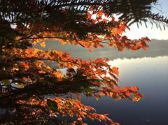 The Colours of Fall/ Les merveilles de l'automne (anng48) Tags: canada fall quebec pq stdonat lanaudiere lautomne autumnreds lacarchambeault