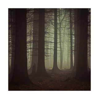 darkwoods12