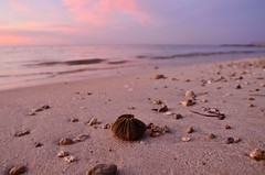 Pastel (faithroxy) Tags: sea seaside dusk pastel pink serene shell sand beach montegobay mobay jamaica caribbean tropical 14mm seascape nature
