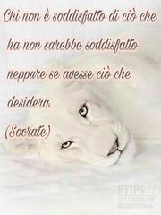https://www.facebook.com/MossoTiziana/ #Tiziana #Mosso #Tizi #Twister #Titty #lovecat #cat #love #link #page #facebook #aforisma #citazione #frase #buongiornoatutti #buonpomeriggio #buonaserata #buonanotte #atutti #adomani #soddisfazione #Socrate (tizianamosso) Tags: citazione adomani tiziana link lovecat titty facebook twister socrate tizi mosso love buonpomeriggio soddisfazione buonanotte buongiornoatutti frase atutti buonaserata page aforisma cat