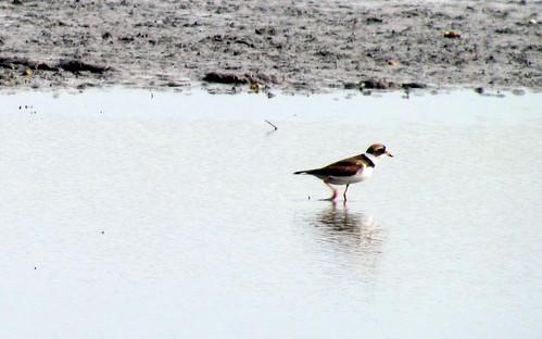 07 Duck Harkers Island NC 9768