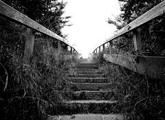 Auf dem Weg zum Strand (juli_ei) Tags: blackandwhite stairs canon zeeland ef2470mmf28lusm niederlande treppen 6d domburg schwarzweis eos6d