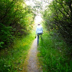 Walking into the light (Trinimusic2008 -blessings) Tags: trees sky urban toronto ontario canada green nature water grass june thanks pond etobicoke to gratitude 2014 humberbaypark trinimusic2008 judymeikle