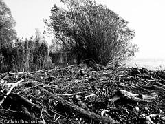 Seashore (themadcath) Tags: wood sea sky white lake black tree nature water grass leaves sticks bush stones branches pebbles shore bodensee