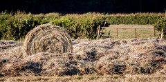 Hayroll (Davescunningplan) Tags: rural gate harvest hedge roll hay