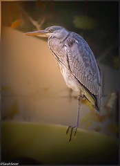 Winter Sunrise #wcs1 #birding (WhyCallSarah) Tags: winter june 30 sunrise birding 2014 1045am wcs1