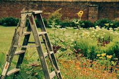 Ladder in the King's Garden, Fort Ticonderoga (Chexjc) Tags: county new york flowers lake canon garden fort adirondacks kings champlain ladder tamron essex ticonderoga 1720 t4i