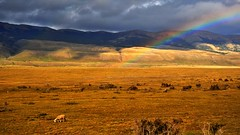 Rainbow near Puerto Natales (flowerikka) Tags: chile patagonia clouds rainbow chili sheep torresdelpaine pampa torresdelpainenp elitephotography quernosdelpaine