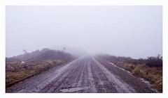 Tierras Altas (_) Tags: fog colombia moor neblina niebla silencio paramo melancolia tranquilidad humedal chingaza pnnchingaza