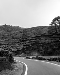 The curves and undulations (Arrested Sunlight) Tags: india beautiful rain clouds garden drive tour scenic roadtrip kerala resort route plantation hillstation westernghats munnar teaestate tealeaves refresh nilgirirange